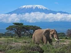Elefante con Kilimanjaro de fondo en Amboseli