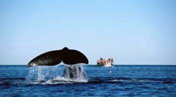 Avistamiento de Ballenas, Argentina