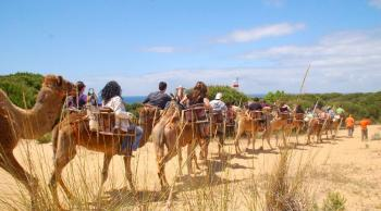 Doñana Camellos
