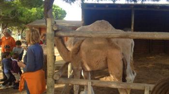 Camellos en Doñana