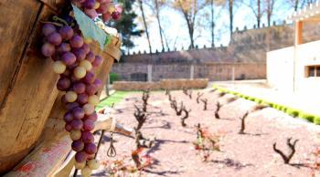 Museo del Vino en Veruela