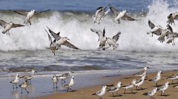 Pájaros Doñana
