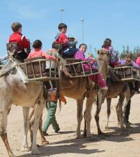 Paseo camello Doñana